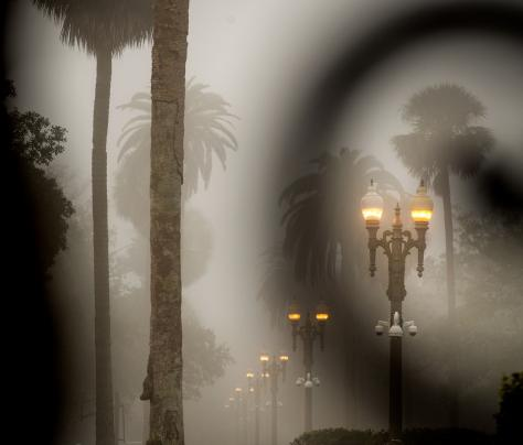 Palm Trees At Night - The Murphy Institute
