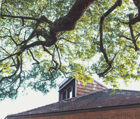 Tree Over Roof of Building on Tulane University's Campus - The Murphy Institute